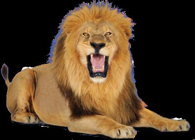 لو امامك اسد تضحي بمين من الاعضاء عند رقم 7 ..!!!! Lion_PNG23263