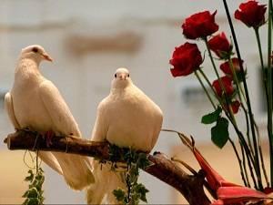 Нешто за љубовта - Page 19 Simboli-za-ljubav-i-njihovo-znacenje-6