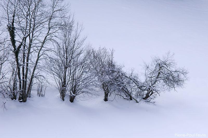 Neige aimée ou honnie Haie-neige-800