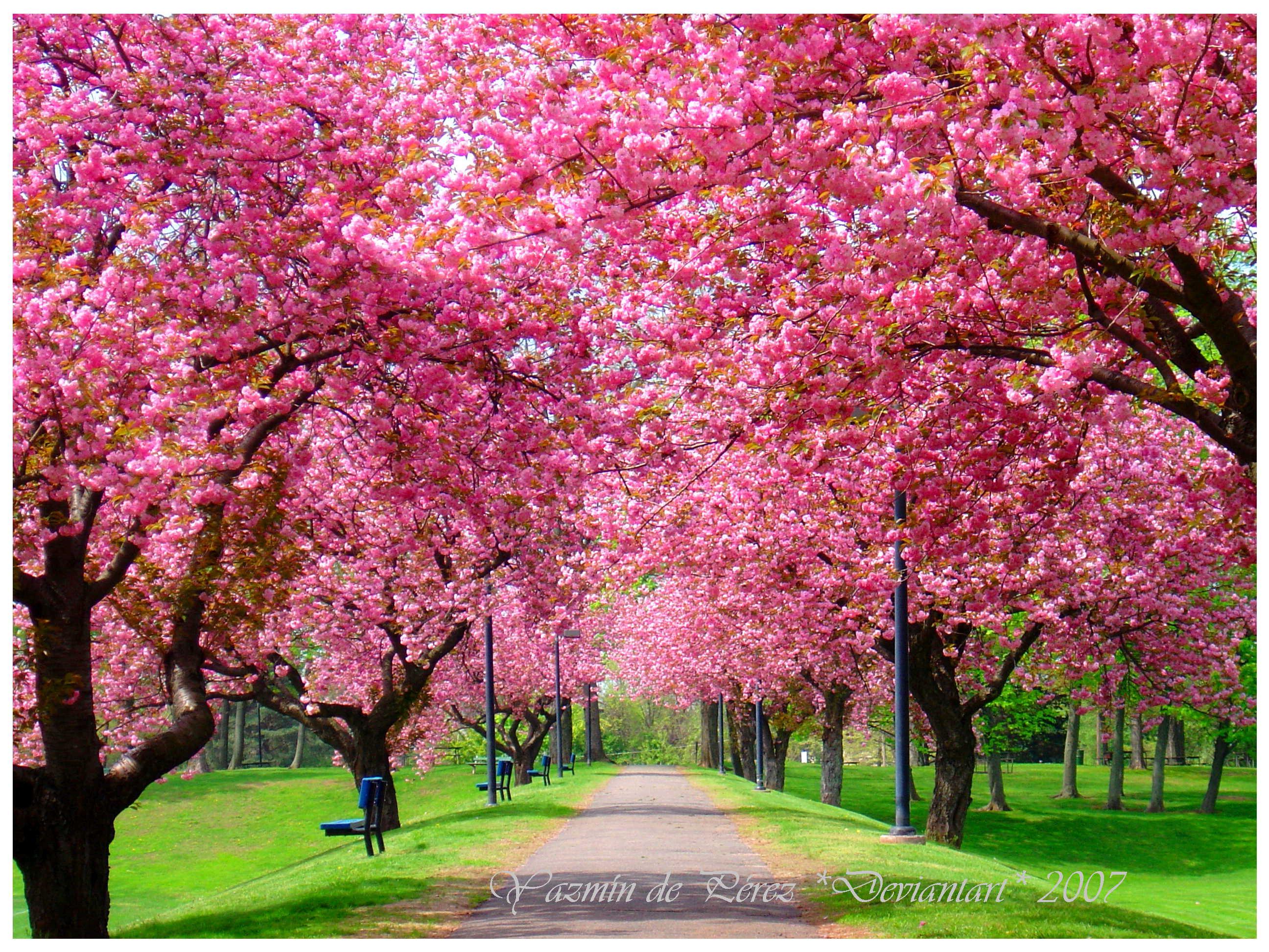 Romantično godišnje doba Spring