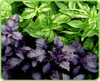 Магия растений (подробное описание магических свойств) A94df959eea40bc6a06cde6d726dea85