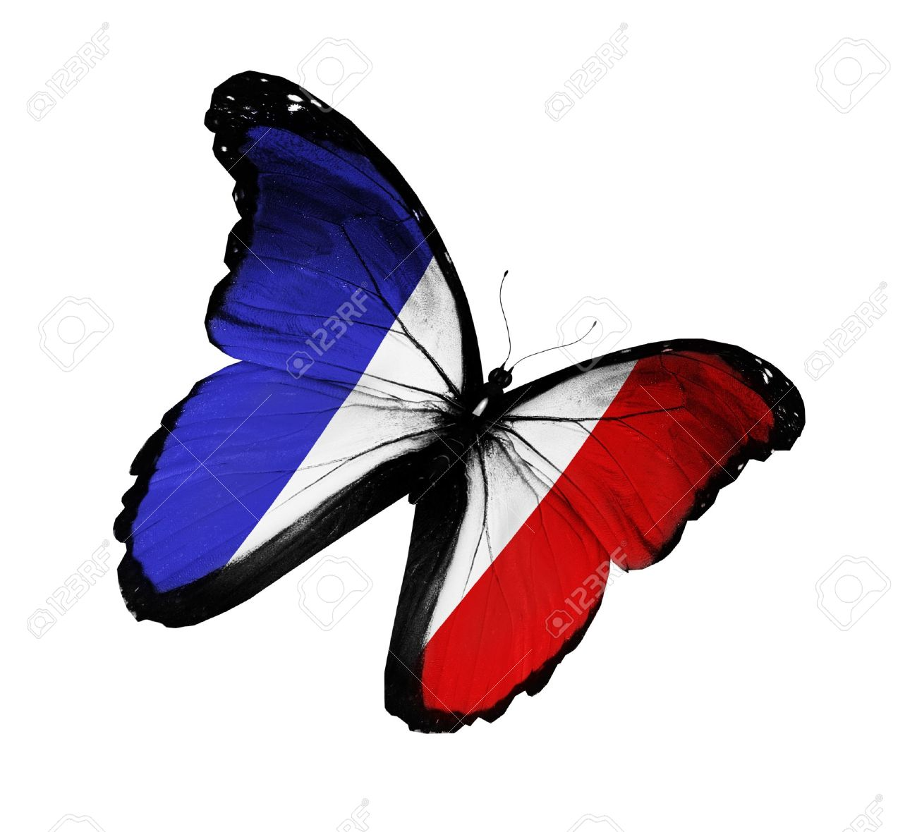 PM´s Prediction Game Season VII | year 2015 - Page 43 15307514-French-flag-butterfly-flying-isolated-on-white-background-Stock-Photo