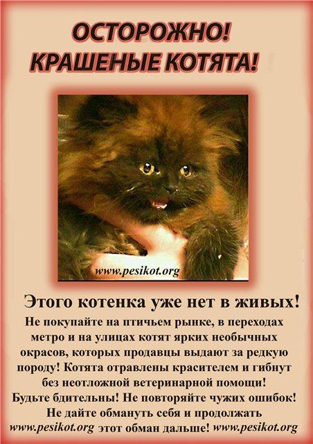 """Не покупайте котят на """"птичьем"""" рынке!  Cats"""