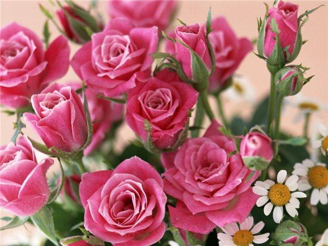 С Днем Рождения! Поздравления форумчан - Страница 20 Privet3