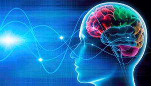 Лиза Ренье. Программирование подсознания Brain-598x342-300x172