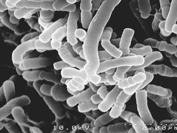 Пробиотики Probiotiki_dlya_kishechnika_1