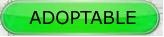 LILI - x griffon 8 ans blanc moucheté/noir- Refuge de la Picoterie à Crogis (02) Sts_adoptable