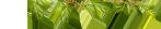 La Petite Fermette Deco-qeel-feuilles