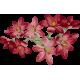[Jeu de dés] Cueillons des pâquerettes Fleur-1