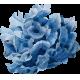 [Jeu de dés] Cueillons des pâquerettes Fleur-3