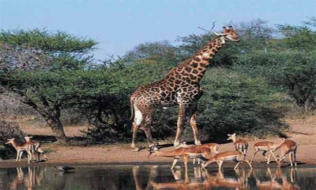 موسوعة شاملة عن المحميات الطبيعية - حصريا على منتدى واحة الإسلام - صفحة 2 2894201503