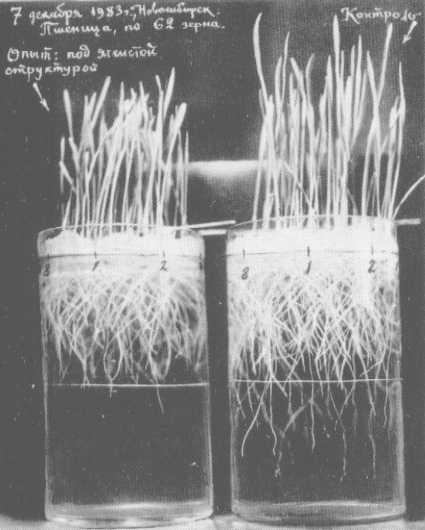 la machine volante de grebennikov Grebcroissplant