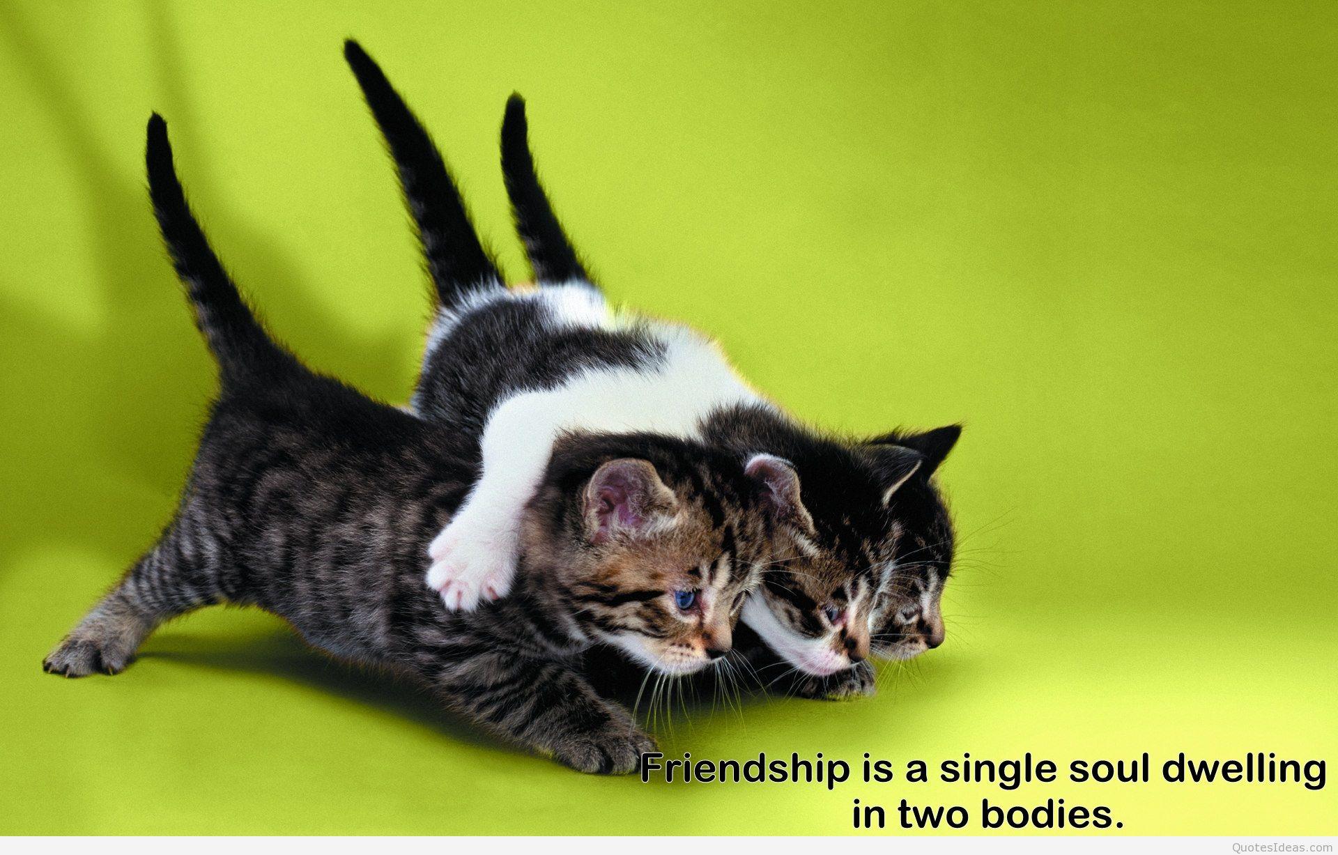 Poruka prijatelju - prijateljici - Page 5 Best-friends-forever-quotes1