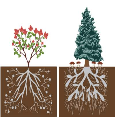 الجذور النباتية والآيات الربانية فيها 13