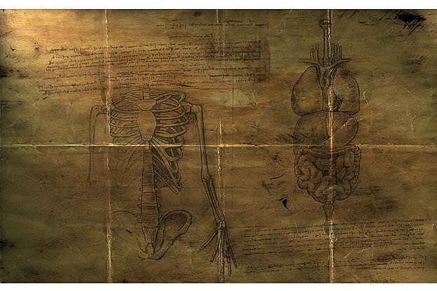 Sirènes Tragédie et Complot......... - Page 3 Skeletal-and-organs