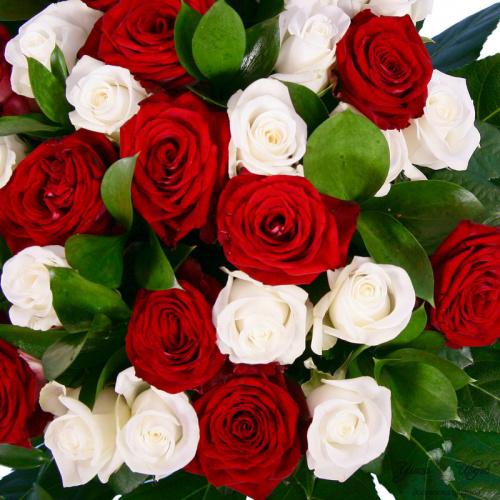 Война и мир алых и белых роз. Original