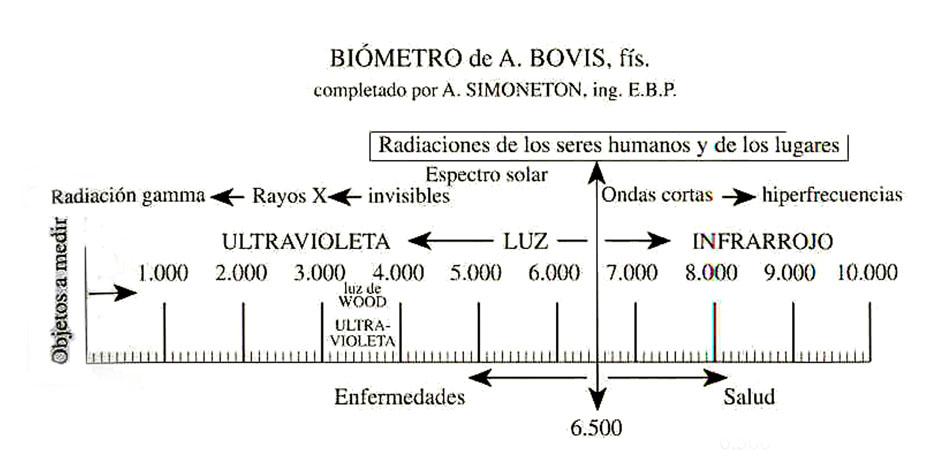 BIOMETRO  (ZONAS DE ENFERMEDADES Y VIBRACIONES ) B.%20bovis