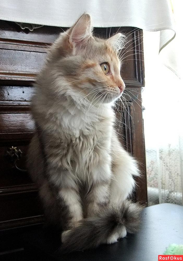 Домик для кошки A6f27d100f72ecc936f7994cdbdd8c80