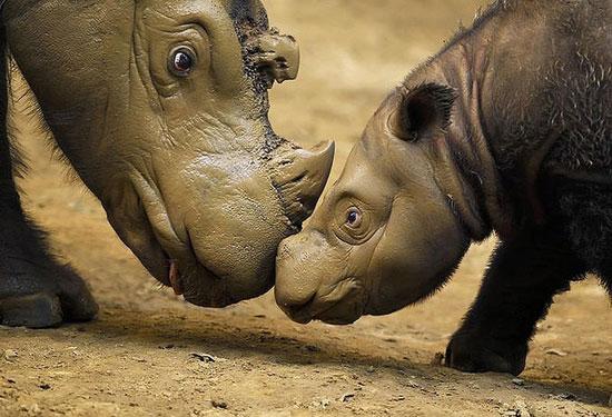 самые странные животные планеты 1308166888_4