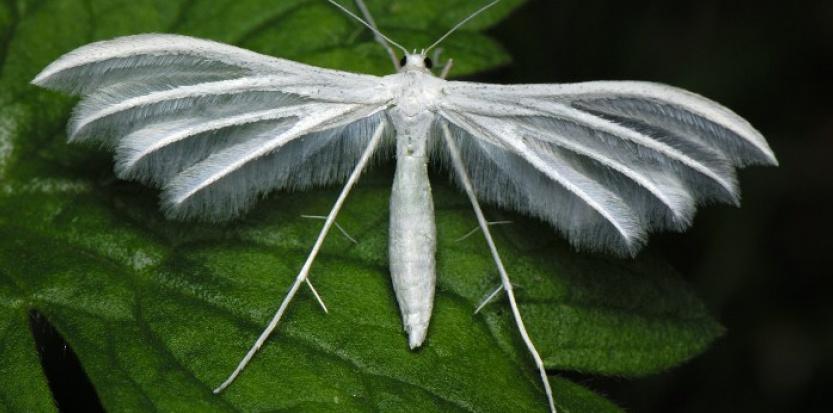 Le monde merveilleux des insectes - Page 4 13602251-diaporama-du-saiga-au-regalec-5-animaux-meconnus