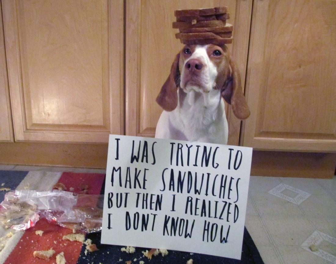 Le chien ne sait pas qu'il a fait une bêtise - Page 2 13957307