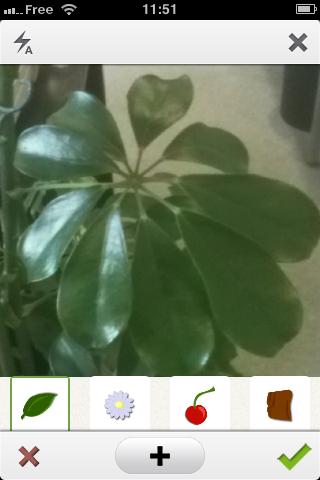 Pl@ntNet : l'application smartphone qui identifie les végétaux 5409284