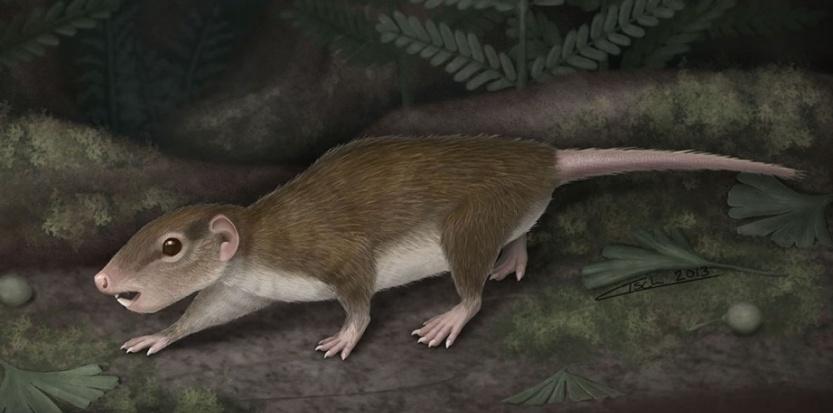 Un fossile de 160 millions d'années explique l'avènement des mammifères. Par Joël Ignasse 6240658-un-fossile-de-160-millions-d-annees-explique-l-avenement-des-mammiferes