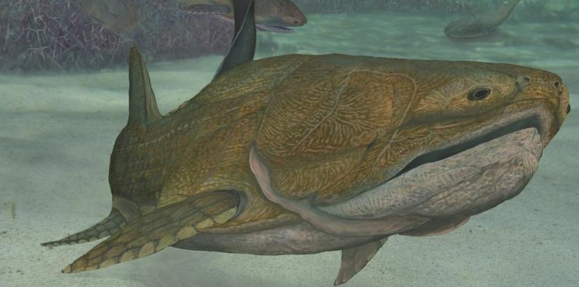 Le petit poisson qui chamboule tout dans l'évolution Par Joël Ignasse 6438959-le-petit-poisson-qui-chamboule-tout-dans-l-evolution