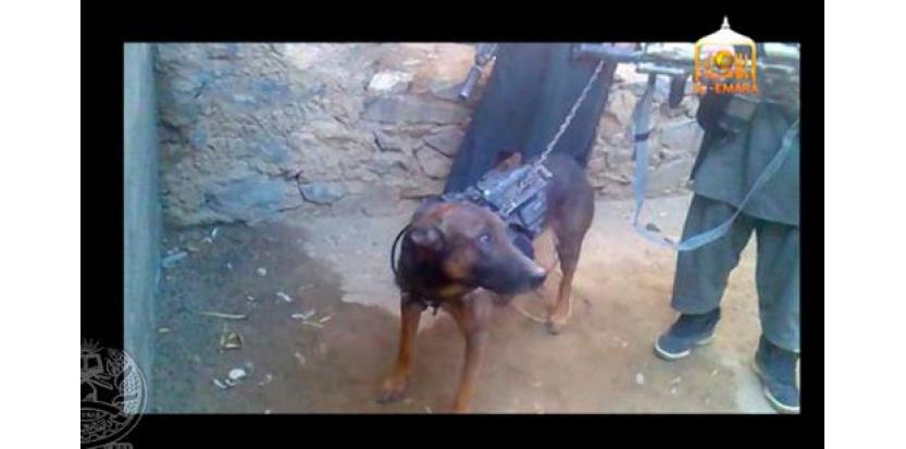 Et les chiens de guerre dans tout ça ??? 6926332-afghanistan-les-talibans-affirment-avoir-capture-un-chien-americain
