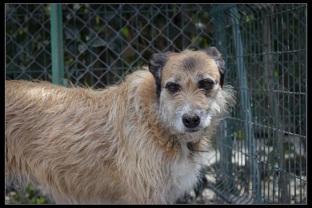 LORYE - x griffon 8 ans - Refuge de Digne les Bains (04) Refuge-chiens-lorye-0291