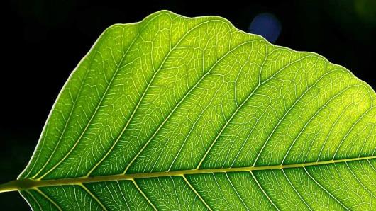 Të Vërtetat e Fshehura - Faqe 10 Leaf_2