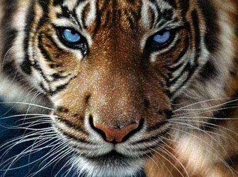 Planètes et animaux ! Tigre-echappe-France-s-ennuie-Histoire-Systeme