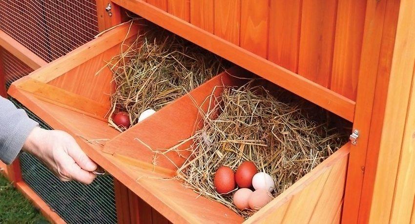 Гнезда для кур своими руками  Gnyozda-dlya-kur-nesushek-svoimi-rukami-foto-razmery-1