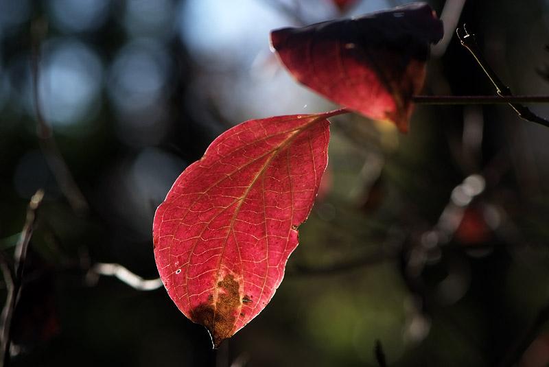 Dernière série d'automne (avant l'année prochaine) 221108_01