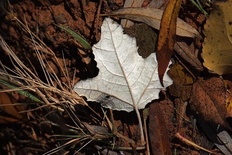 Dernière série d'automne (avant l'année prochaine) 221108_11