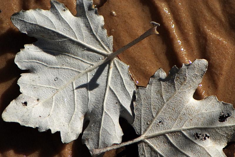 Couleurs d'automne en Luberon Colorado_11_07