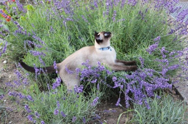Photos des chats sauvés, avant/après 1344510701-img0400-1--lola
