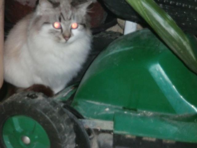 Photos des chats sauvés, avant/après - Page 4 1405709726-image