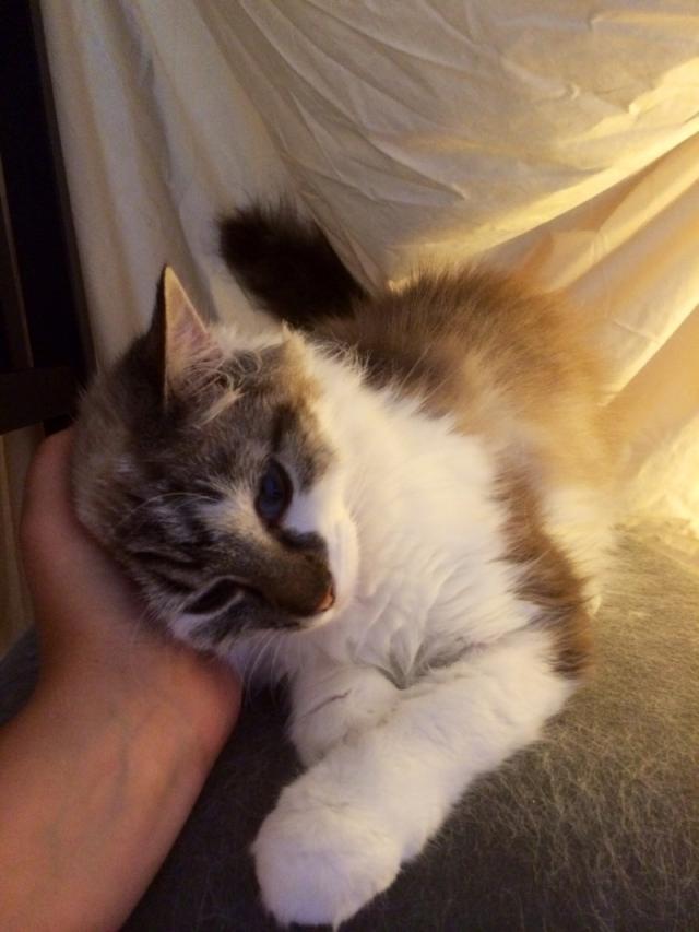 Photos des chats sauvés, avant/après - Page 4 1405709766-image