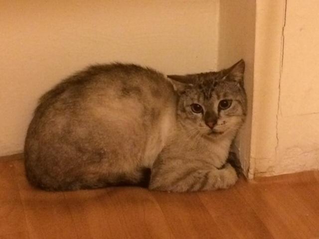 Photos des chats sauvés, avant/après - Page 5 1408196294-image