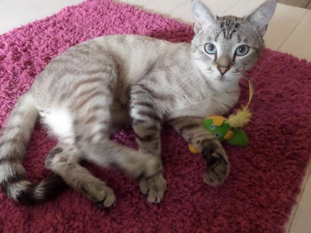 Photos des chats sauvés, avant/après - Page 5 1408197134-image