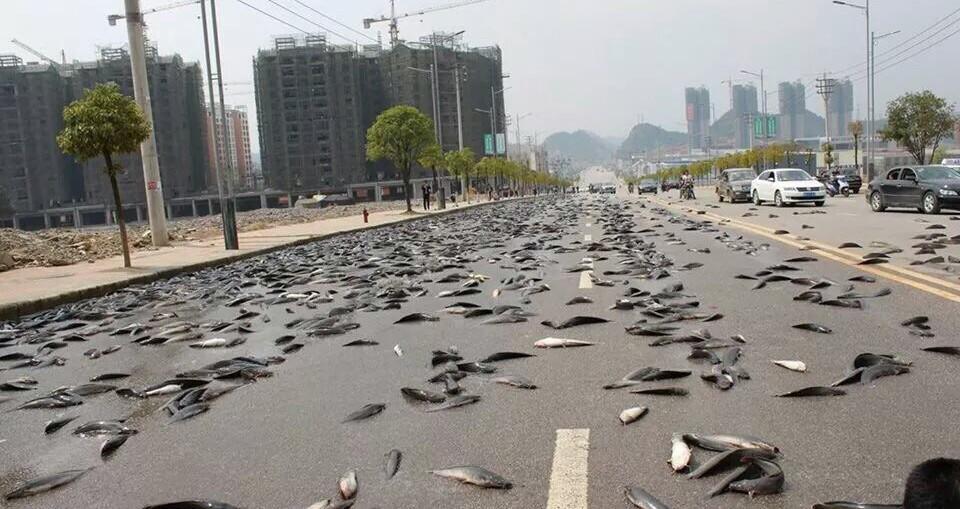 Une pluie de poissons s'abat sur la Thaïlande (photos) Ob_73f5af_fish-rain-in-thailand-4
