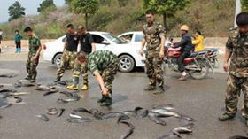 Une pluie de poissons s'abat sur la Thaïlande (photos) Ob_c53573_serpent
