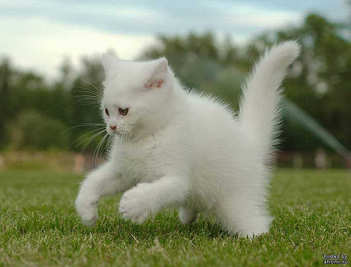Все самые красивые кошки Мира Cats_31