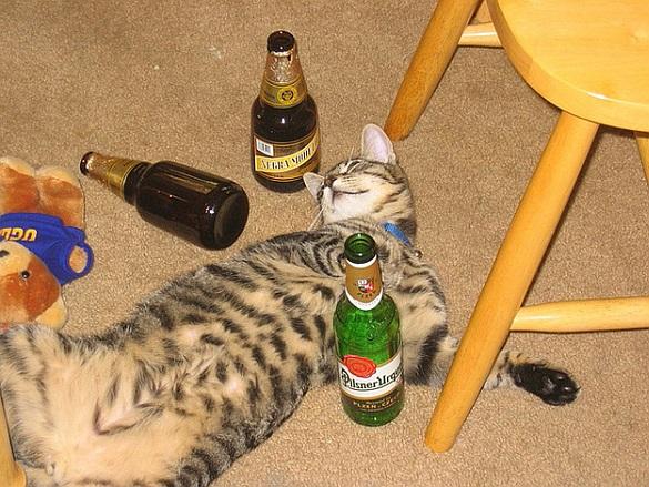 21-11-14 ~ Manche 04 Drunk_kitty
