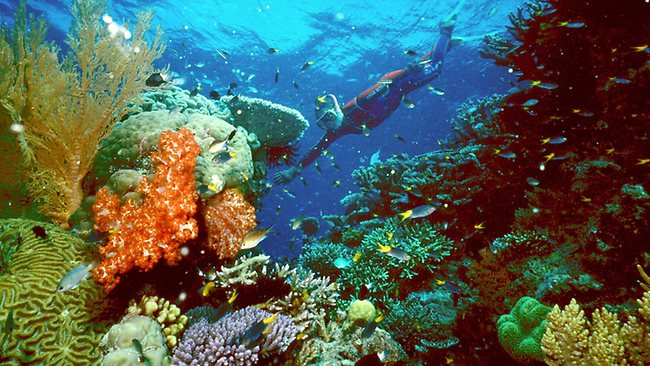 Losa del mar inestable cerca de Barrera de Coral  podría causar un gran tsunami  en el norte de Queensland 889253-a-tourist-swims-on-the-great-barrier-reef