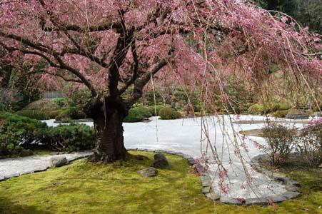 Japonija Jap_garden_1