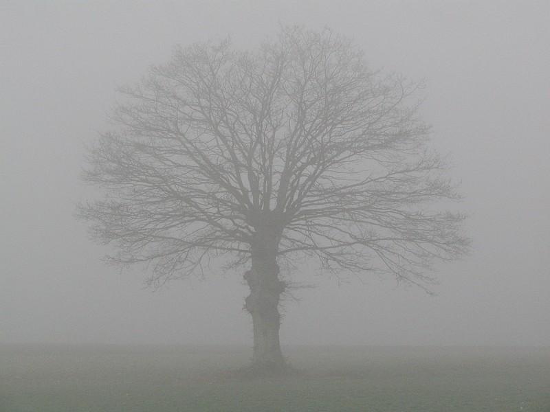 Bonjour à tous Brouillard