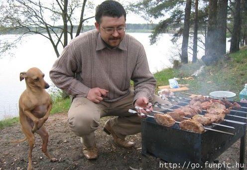 Quase tres mil dogs - Página 5 00032121