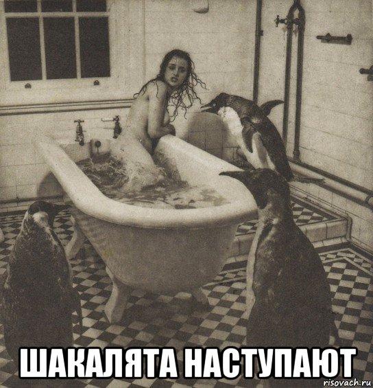Мемы от Кота Бегемота и от форумчан Stolbnyak_231180411_orig_